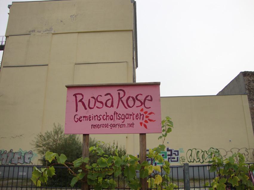 Rosa Rose Herbst