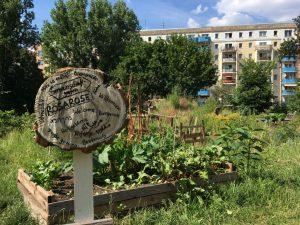Rosa Garten Gemeinschaft