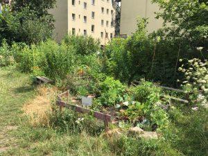 Berlin Gemeinschafts Garten