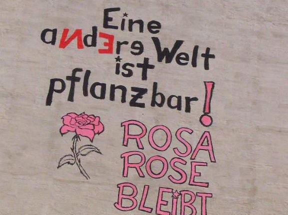 Rosa Rose Wandbilder