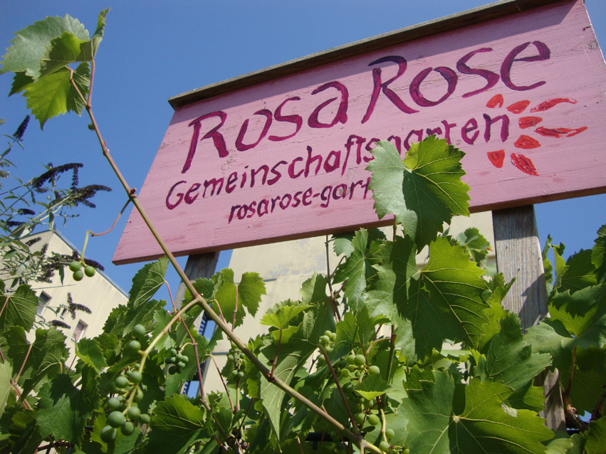 Rosa Rose Sommer