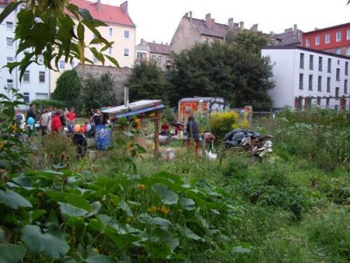 Gartenfest_2006_Rosa_Rose